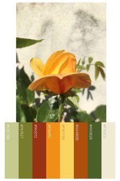 warm greens and apricots color palette Green Color Pallete, Bedroom Colour Palette, Spring Color Palette, Spring Colors, Green Colors, Orange Aesthetic, Aesthetic Colors, Color Wheels, Salad Bar
