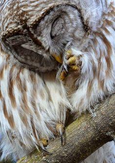 15 Animais - Quem resiste a essas fofuras?