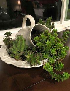 Succulent Gardening, Succulent Terrarium, Cacti And Succulents, Planting Succulents, Container Gardening, Planting Flowers, Succulent Bowls, Vertical Succulent Gardens, Succulent Centerpieces