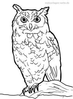 This domain may be for sale! Animal Sketches, Animal Drawings, Sgraffito, Stained Glass Patterns, Coloring Pages For Kids, Sculpting, Owl, Woodworking, Watercolor