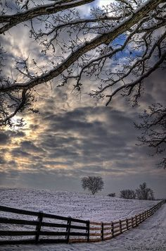 Morning snow in Taylorstown, Virginia, Winter scenery, fence, trees, cloudy sky, tree, beauty of Nature, photo