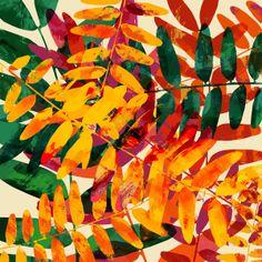 Brava #autumn #leaves // Allison Holdridge