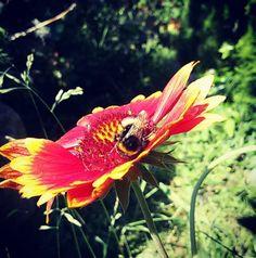 #greenday #ecology #garden #flowers #bee #summertime #nature_perfection #positive #happy #healthylifestyle #zen #relaks #zdrowystylzycia #pozytywnie #szczęśliwa #takasytuacja #patandrub