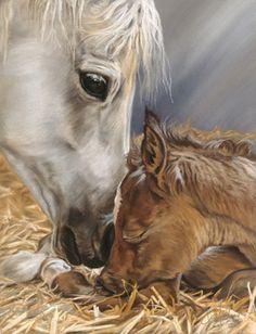The Gift   the gift, gift, kim mcelroy, foal, newborn, horse,   Spirit of Horse Art