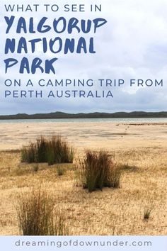 Find out what to do on a camping trip from Perth to Yalgorup National Park, Western Australia. Discover ancient thrombolites in Lake Clifton, nature walks, crazy Christmas spiders and endangered cockatoos! #australia #westernaustralia #spiders #travel Perth Australia, Western Australia, Australia Travel, Best Places To Travel, Places To See, Preston Beach, Australian Road Trip, Australian Photography, Travel Advise