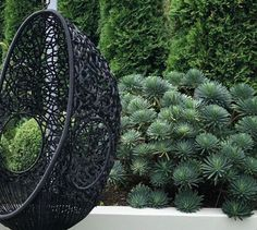 Hanging Chair, Hanging Out, Swing Seat, Nursery Design, Garden Styles, Hedges, Cactus Plants, Garden Design, Outdoor Furniture