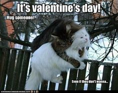 Pin for Later: 14 Perfectly Sarcastic Expressions of Valentine's Day Torture  No one can resist cuddling cats! Source: Cheezburger