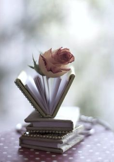 A Rose on the Open Pages of a Book