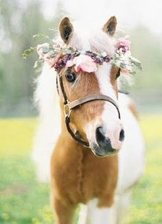 pony flower crown in the summertime tie/braid mint into their manes to keep off . - pony flower crown in the summertime tie/braid mint into their manes to keep off … – Pferde – - All The Pretty Horses, Beautiful Horses, Animals Beautiful, Cute Horses, Horse Love, Mini Horses, Poney Miniature, Animals And Pets, Cute Animals