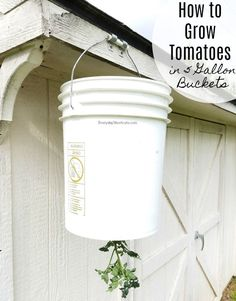 A genius hack to grow tomatoes in a small space. Get delicious, fresh tomatoes… - Diyprojectgarden.ml - A genius hack to grow tomatoes in a small space. Get delicious, fresh tomatoes … - Vegetable Garden For Beginners, Backyard Vegetable Gardens, Tomato Garden, Gardening For Beginners, Tomato Plants, Bucket Gardening, Container Gardening, Gardening Tips, Gardening Books