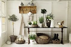 `.I'd feel sorry for these plants, shut up in a Garden Room. Stoep idea?
