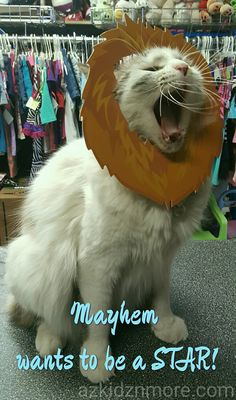 Mayhem wants to be a STAR  #cutestcat #cutestkitty