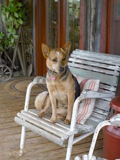 Lola Rose, an Australian cattle dog, claims an antique chair on this Kentucky home's front deck.