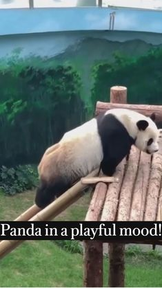 Baby Animals Pictures, Funny Animal Pictures, Animals And Pets, Cute Baby Videos, Cute Animal Videos, Cute Little Animals, Cute Funny Animals, Animal Hugs, Baby Panda Bears