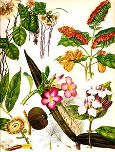 Vintage 1970 TROPICAL Color Art Print Wild Flowers Original Book PLATE 61 Beautiful Large Tropical Pink White Orange Green Leaves and Seeds
