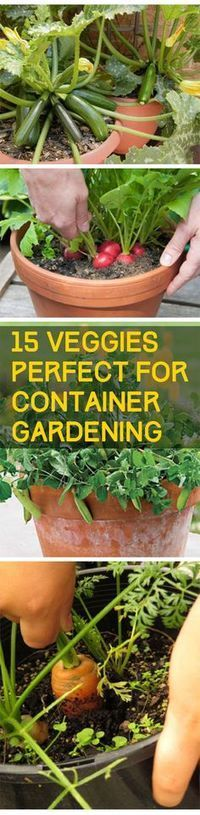 Veggies Perfect for Container Gardening - DIY Garden Diy Gardening, Indoor Vegetable Gardening, Veg Garden, Organic Gardening Tips, Edible Garden, Lawn And Garden, Terrace Garden, Veggie Gardens, Vegetables Garden