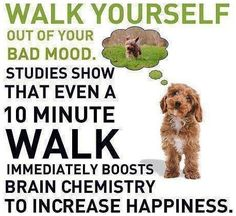 Health Benefits of Walking inspiration, motivation, quotes, self development, happiness, funny, exercise #fastsimplefit Get Free Fitness and Weight Loss News and Tips by Liking Us on: www.facebook.com/FastSimpleFitness