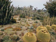 A Portion of the Desert Plant Collection in Huntington Botanic Gardens Lámina fotográfica