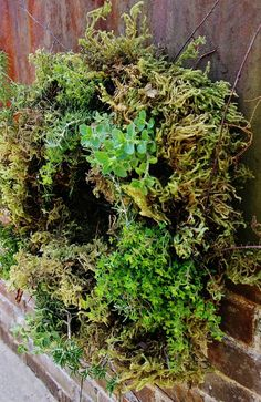 Living Herb Wreath--- I have to find a wreath form, but I am so trying this!!! Julie