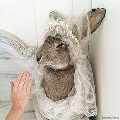 Huge French Vintage Taxidermy Hare Rabbit Fairytale Nina Hartman Jeanne D'Arc Living