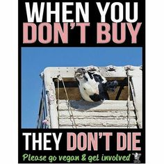 when you don't buy they don't die; why finance animal cruelty; please go #vegan