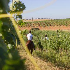 E conhecer a nossa vinha com um magnífico passeio a cavalo?  #cavalo #horse #equestre #vineyard #herdadedosgrous #alentejo #beja #hotel #landscape #relax