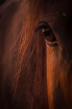 Pferde - hair - Art World Most Beautiful Horses, All The Pretty Horses, Amazing Animals, Animals Beautiful, Cute Horses, Horse Love, Horse Photos, Horse Pictures, Equine Photography