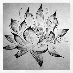 black and white lotus flower sketch