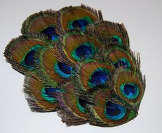 Peacock Feather Pad   FP119  1 pc by isakayboutique on Etsy, $5.50