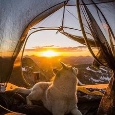 10/10 would recommend this view to a friend. #campingwithdogs @followyourfeet17