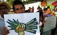 compañía frutera, MELEXSA, Meloneras, STAS, Honduras. FYFFES perdida en su propio laberinto