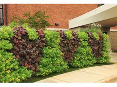 This unique 2 sided living green wall is welcoming patients at a medical center. Beautiful! http://www.prweb.com/releases/2016/05/prweb13436927.htm