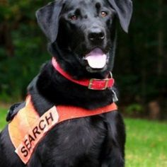 Soot, 2012 American Humane Association Hero Dog Awards™ finalist. Rescued a lost 78-year-old, diabetic hunter on a remote mountaintop in West Virginia in winter.
