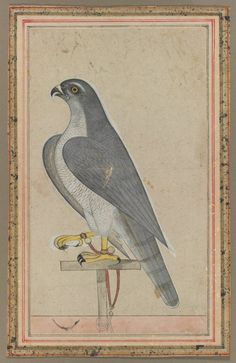 Falcon | Cleveland Museum of Art