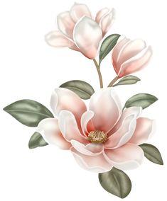 Botanical Flowers, Botanical Prints, Floral Illustrations, Botanical Illustration, Watercolor Flowers, Watercolor Paintings, Flower Phone Wallpaper, Floral Drawing, Magnolia Flower