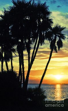 ✯ Secluded Paradise