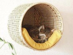 A wicker trash can outfitted with a pillow and affixed to the wall -- what a great idea for a napping place! CatClinicofCobb.com
