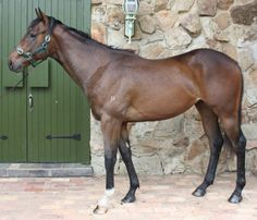 Sea Biscuit Sea Biscuit is an athletic gelding by the four time Group 1 winner Golden Snake. Golden Snake is...