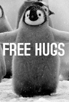 I want a penguin hug.