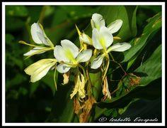 SIBERUT Site - http://indonesie.eklablog.com Page Facebook - https://www.facebook.com/pages/Indon%C3%A9sie-par-Isabelle-Escapade/269389553212236?ref=hl