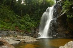 Sinharaja Tropical Forest Sri Lanka Transforming the way we travel http://yourbesttraveler.com