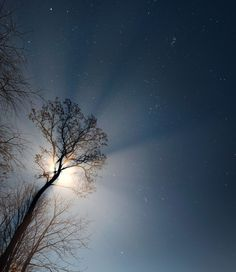 """Apogee Moon And the Winter Sky, """"Fog rolled in as the temperature dropped after today's rainfall. The bright moon cast distinct rays of light through gaps in the trees. In this image, Jupiter shines just above left of the moon, nearly hidden by its glare. The winter sky fills the rest."""" - Neil Winston"""