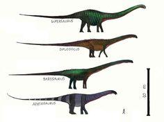 1280px-Diplodocidae.jpg (1280×957) - Dinosauria, Saurischia, Sauropodomorpha, Sauropoda, Neosauropoda, Diplodocoidea.