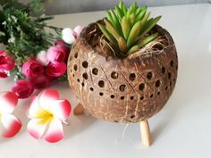 Handicraft Coconut Shell Pot Planter Garden Candle Stand Holders Natural Color  #Unbranded