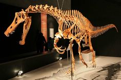 The name of the long-snouted dinosaur Irritator hints at the troubled history surrounding the spinosaur's classification