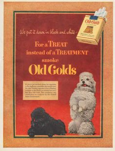 Vintage 1952 Old Golds Cigarettes print ad features Black and white poodles by Vividiom, $8.00