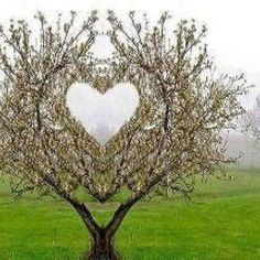 Find images and videos about nature, heart and tree on We Heart It - the app to get lost in what you love. I Love Heart, With All My Heart, Happy Heart, Images Lindas, Terre Nature, Heart In Nature, Heart Tree, Heart Images, Heart Pictures