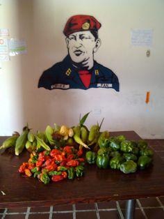 Cosecha de Huerto Ecológico Hugo Chavez