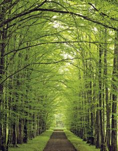 Tree Lined Roads Stock Photos Tree Tunnel, Beau Site, Tree Line, Dont Understand, God Is Good, Celestial, Pathways, Belle Photo, Gods Love