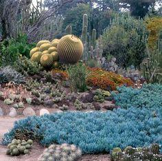 Jardim Botânico Huntington  - San Marino Califórnia   Os jardins  cobrem uma área de 120 acres (49 ha) com um mostruário plantas  de todo o mundo.   Os jardins estão divididos em mais de uma dúzia de temas, incluindo o Jardim australiano, coleção camelias, jardim infantil, jardim do deserto , jardim de ervas, jardim japonês , jardim Lily Ponds, jardim de palmeiras , jardim de rosas , jardim Shakespeare ,  jardim subtropical e da selva, e o jardim chinês